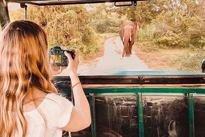 Yala National Park Safari with Driva. Jeep and Enter ticket, Parque Nacional Yala, SRI LANKA