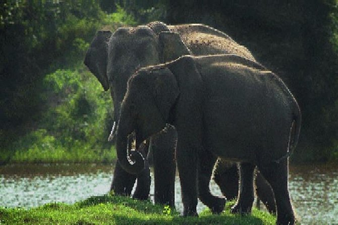 Skip the Line: Morning Safari Yala National Park Ticket, Parque Nacional Yala, SRI LANKA