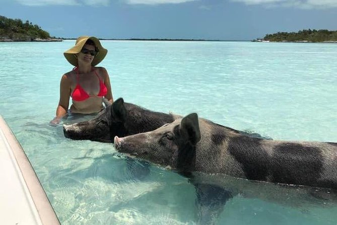 20 minute scenic and informative boat ride through the mangroves to the Long Island swimming pigs. At the pig beach you are able to feed and take photos with the pigs. Following this we make our way over to a beautiful sand bar and along the way you might see dolphins, sea turtles, stingrays and even sharks. <br><br>Also, if you would like to snorkel there are a few a coral reefs that the guide can stop too. While snorkelling you might find one or two conchs that the guide will use to make you a fresh conch salad.