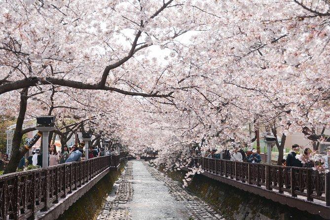 Jinhae Cherry Blossom Festival Day Tour(from Busan), Busan, South Korea