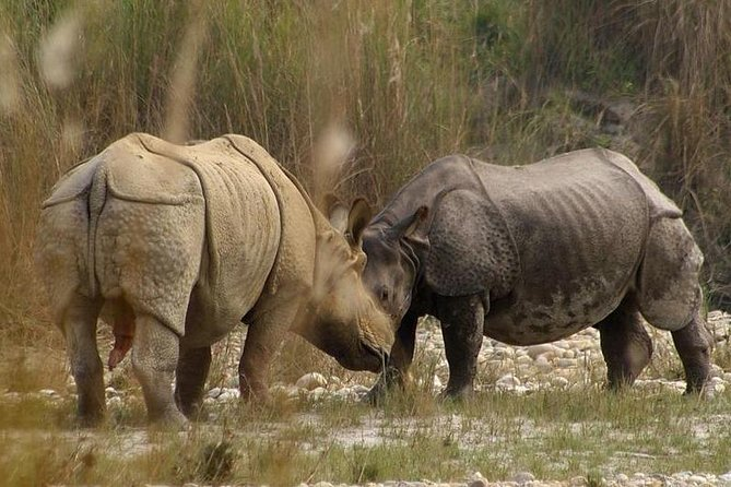 Chitwan Wildlife Safari tour is not just about animals and birds but it is more than that. As well as, after the visit to Chitwan National Park, you will be full of pride by visiting one of the UNESCO world heritage sites of Nepal. There are mainly two national parks, which are very popular among tourists from all over the world. One is Chitwan National Park and another is Bardia National Park. <br>Activities of Chitwan Wildlife Safari:<br>Jungle safari<br>Canoeing<br>A jungle jeep safari or jeep driving in the jungle<br>Bird watching<br>Walk around the Tharu village<br>In addition, you will get treated with an authentic Tharu cultural dance and Nepalese cuisine.