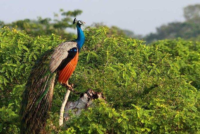 Yala National Park Wildlife Safari, Parque Nacional Yala, SRI LANKA