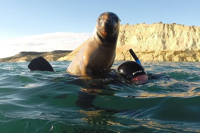 We are experts in water activities. We love what we do and enjoy every moment of this activity. Snorkeling with sea lions is an incredible activity that surprises us every day and will surprise you too. This activity is carried out only in 3 places in the world and in Puerto Madryn its the place with the greatest amount of animals. they are super friendly and love to interact with people. Our main concern is always to care for the animal and the environment, so our boats have all the measures required for the care of the environment. This activity is ideal for cruise passengers as times adjust perfectly, which allows them to even have time to visit the city.