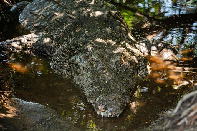 Coastline Northern Shore Excursion & Wildlife Experience, Huatulco, MEXICO