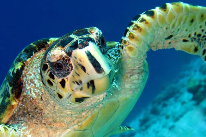 Join us for our daily Land & Sea snorkel combo tour.<br>You will explore the south of Bonaire and see the solar salt flats, Salt Pier as well as the historic slave huts dating back to 1850.<br>Flamingos and Donkeys are frequently seen as we drive southbound. <br>Your guide is a Bonaire tourism trained guide as well as a PADI professional in-water guide.<br>The snorkel portion of the tour will be from the beach and in our Marine Park area which runs along our West coast. Your guide will take care to ensure that your safety comes first while snorkeling.<br>**Tours require a minimum of 2 persons booked to operate this tour.