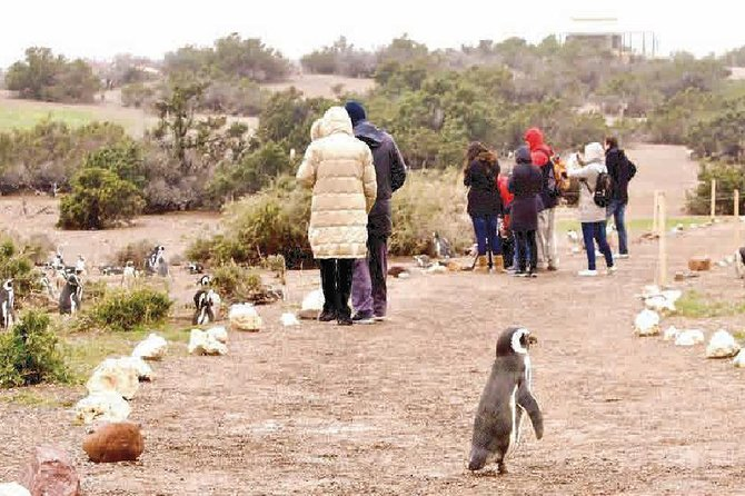 Punta Tombo - Full day tour or Shore Excursion, Puerto Madryn, ARGENTINA