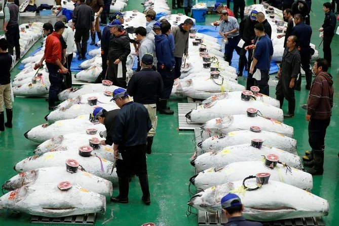 Toyosu Market Morning Tuna Auction and Tsukiji Food Tour with Licensed Guide, Tokyo, JAPON