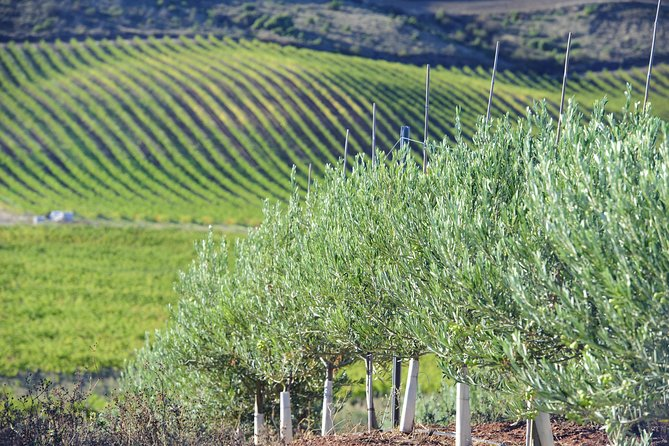 Olive oil and Navarre winery visit with tastings and lunch in small group tour, Pamplona, ESPAÑA