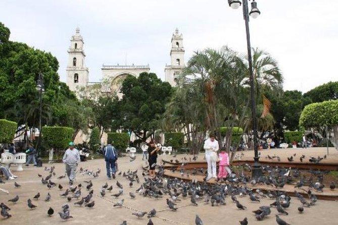 Shore Excursion: Small Group Merida Shopping & City Tour, Progreso, MÉXICO