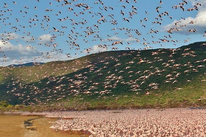 On this safari, you will have a chance to have a birdwatching session and see many species of birds and mostly the pink flamingos. You also get to see animals from Soysambu Conservancy. It's a lifetime experience.<br><br>
