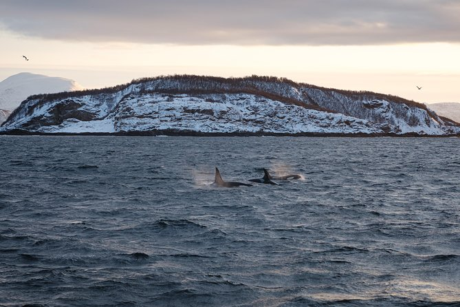Silent Whale Watching, Tromso, NORWAY
