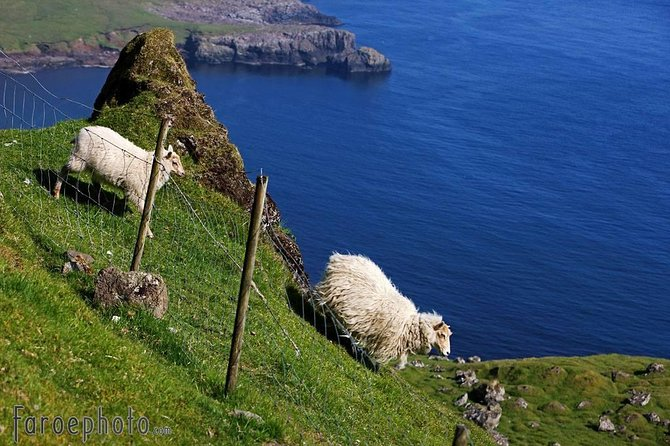 Join this full day excursion to the southernmost island of the Faroe Islands, Suðuroy. The journey starts in Tórshavn, where you will be picked up in the morning by our professional and passionate tour guides, and we head right down to the harbour to the biggest inland ferry of the Faroe Islands, Smyril.<br><br>Onboard this comfortable ferry is a great restaurant where you can buy yourself some breakfast or warm meal.<br><br>The sail from Tórshavn to Suduroy takes two hours, and along the way you will be spoiled with fantastic views like the two small islands Stóri Dímun & Lítli Dímun<br><br>On suðuroy we will visit many villages, drive through some of the most beautiful landscapes, and visit some historical places.