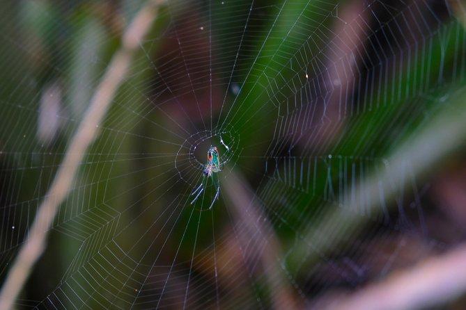 Montecristi & The Rain Forest, Manta, Equador
