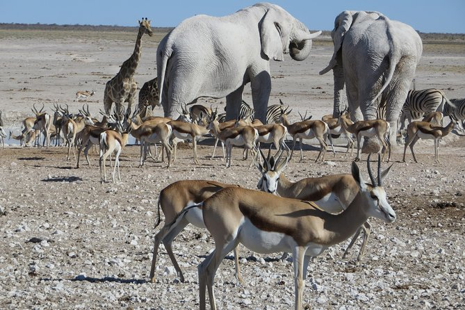 Etosha National Park Safari - 3 Days, Windhoek, Namibia