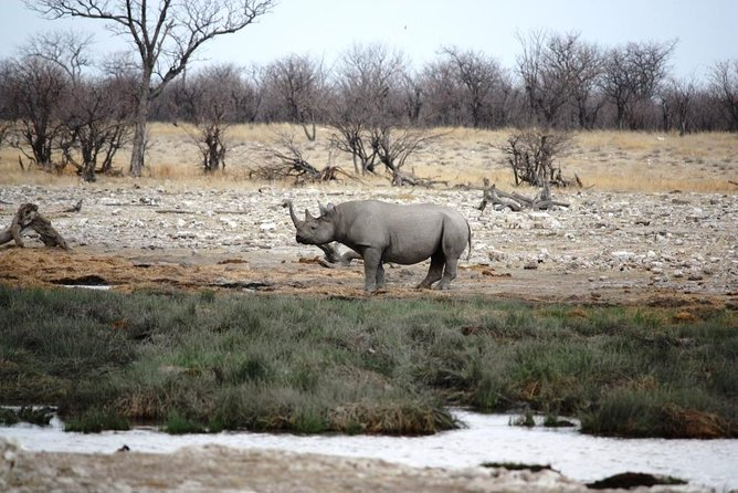 This 6 Days Lodging Safari is the best of Wildlife, abit of the Coastal City and the Oldest Desert in Africa. This safari combines the wildlife of Etosha National Park by which guest will have game drives to see animals like Elephants, Hippo, Giraffe and Lions and in Swakopmund clients will have 2 activities (Quadbiking & Sandboarding) to mention a few activities after that they will be heading Sossusvlei they will have a complete Desert Excursion to visit all the dunes including Deadvlei,Big Daddy,Sesriem, Dune 45 and Sossusvlei Dunes itself! This is one of the best tours for a newcomer to explore Namibia's most visited two Destinations.