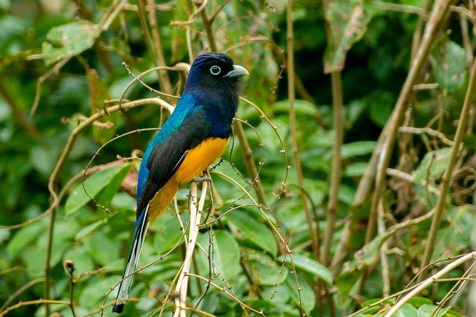 Private Amazing Amazon Discovery Tour - 4 Days, Iquitos, Peru, Iquitos, PERU