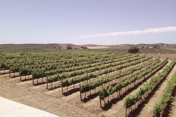 Évora - Inside the Olive Oil, Wine, and Cork Triangle (Private Tour), Lisboa, PORTUGAL