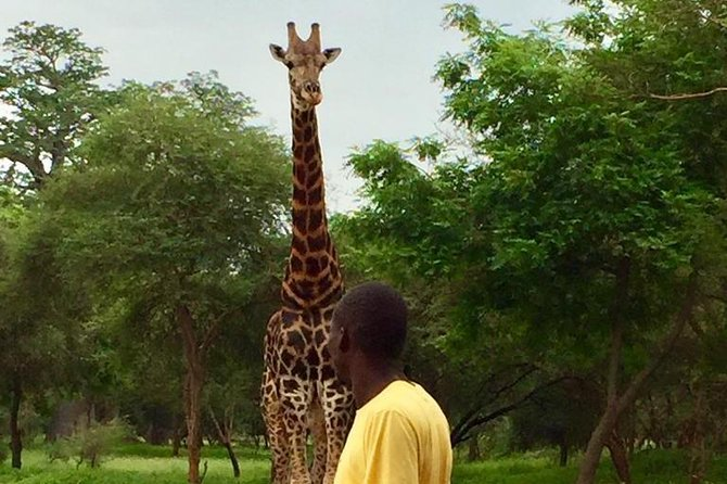 """Bandia Park reserve is one of the major attractions in Senegal for tourists staying in Dakar or nearby area. It is a conservation park that helps protect some African wildlife like giraffes, rhinos, a variety of antelopes, buffaloes, monkeys, crocodiles, tortoises and more. This tour will give you a chance to watch closely the wildlife in an eco-friendly nature. Also <br>Pink <br>Lake: Retba <br>lake is amazing marvel of nature, know througout the world as <br>Pink <br>lake.It""""s a famous for its remarquable pinkish-coloured water (due to unique bacteria and its strong salt content) that can turn to purple depending on the intensity of sunlight"""