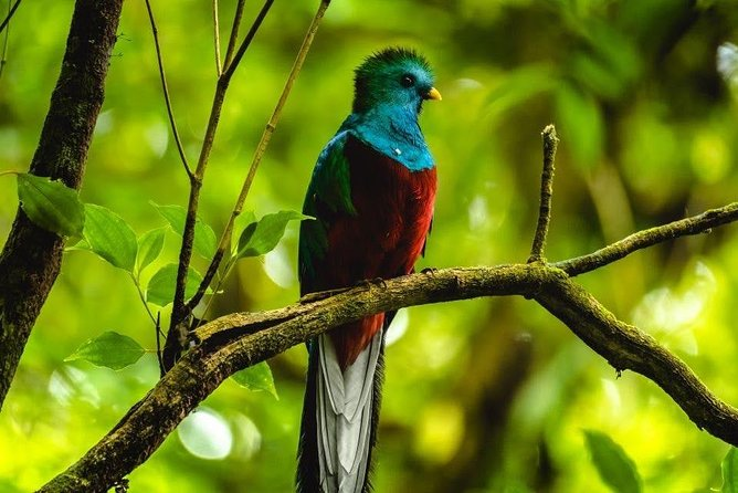 Savegre guided quetzal and wildlife observation tour at Talamanca, Quepos, COSTA RICA