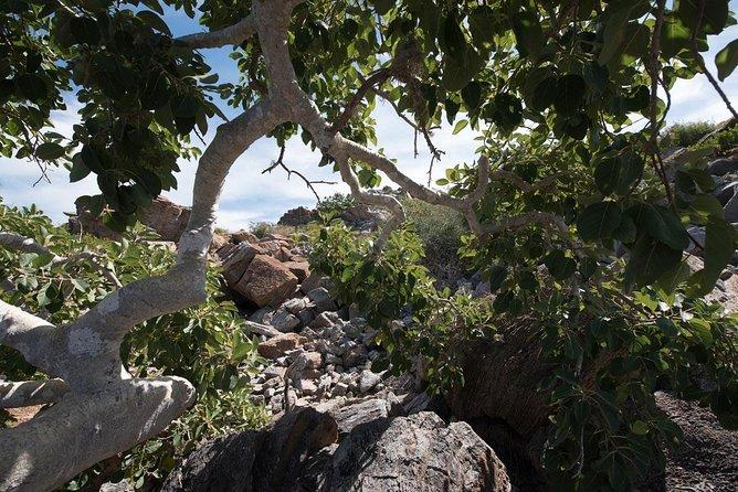 Todos Santos Pacific Bluffs Hike, Todos Santos, MEXICO
