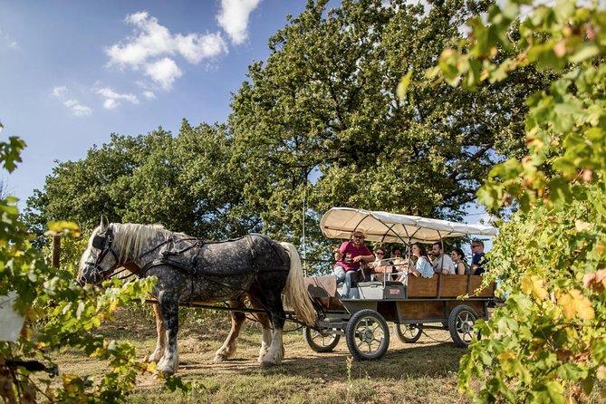 Coach, horse and pic-nic through the vineyard in Umbria, Perugia, ITALIA