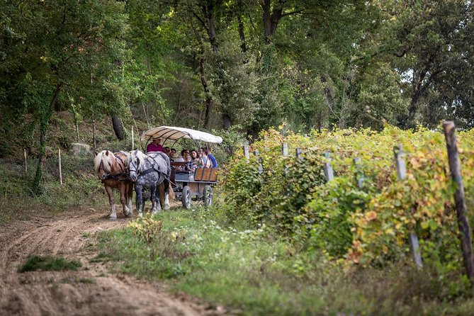 Amazing trotting through the vineyard in Umbria, Assisi, Itália