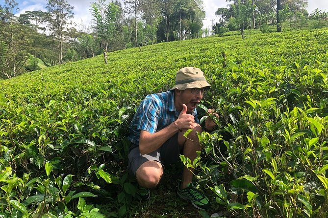 (SKU: LK10AAJ011) Have a truly Sri Lankan experience with a cup of Ceylon Tea or fresh King Coconuts. A tour of immense charm.