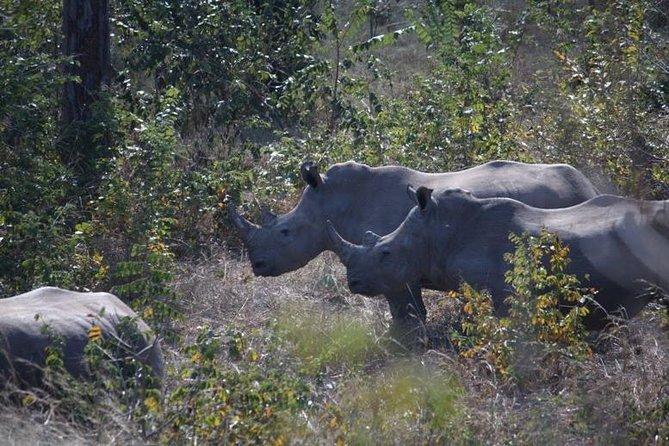 Rhino Walk, ,