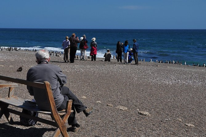 Peninsula Valdes Penguins with lunch and entry fees, Puerto Madryn, ARGENTINA