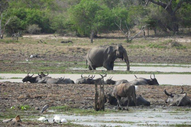 Yala National Park Private Safari, Parque Nacional Yala, SRI LANKA