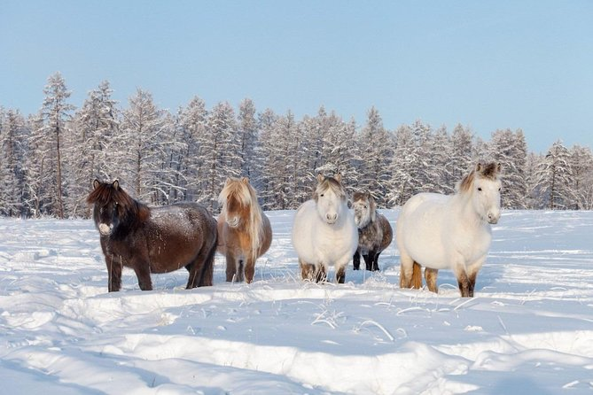 Authentic Siberian Village Life Experience.<br>Spend 1 winter day with Yakutian villagers and horse breeders in the Siberian wilderness and learn more about the Yakutian horse, the unique breed originated in the Republic of Sakha-Yakutia and accustomed to living in the extreme cold.<br><br>HIGHLIGHTS<br>• Ice road across the Lena River<br>• Maya village with Regional Museum<br>• Traditional Sakha (Yakut) villages<br>• Yakutian cuisine at village family's<br>• Sakha village life<br>• Yakutian horses roaming in the wilderness<br>• Horse breeders & farm<br>• Horse sleigh ride<br>• Horseback ride<br>• Guaranteed skip-the-line entrance