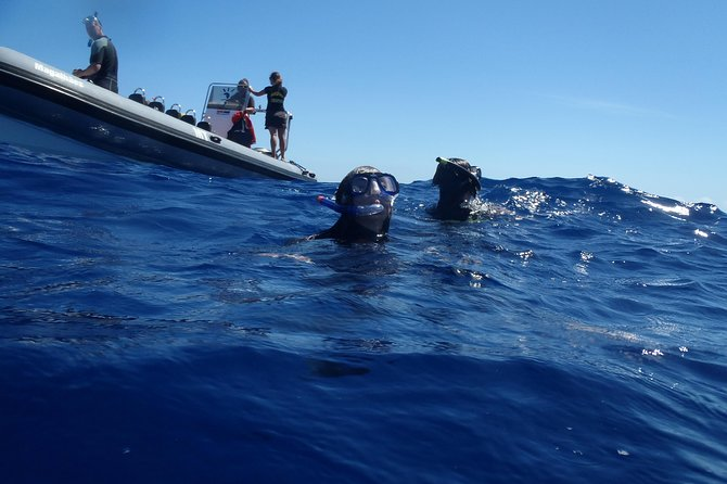 Swim with Dolphins in the Azores, ,