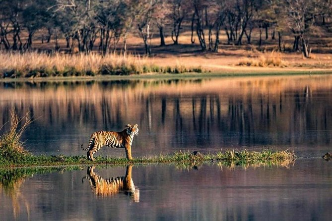 Planning a Ranthambore national park tiger day trip from Jaipur, do it with private Jeep safari for Afternoon session on a same Day Trip From Jaipur with return back in Evening After an Safari. exploring flora and fauna of the Park.