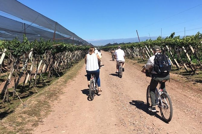 Bike wine tour. Visit 2 of the best wineries, Mendoza, ARGENTINA