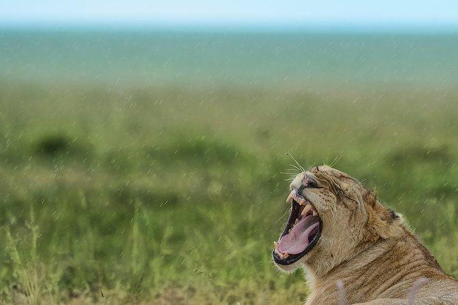 Safari 6 días Parques Nacionales de Tanzania, Arusha, TANZANIA