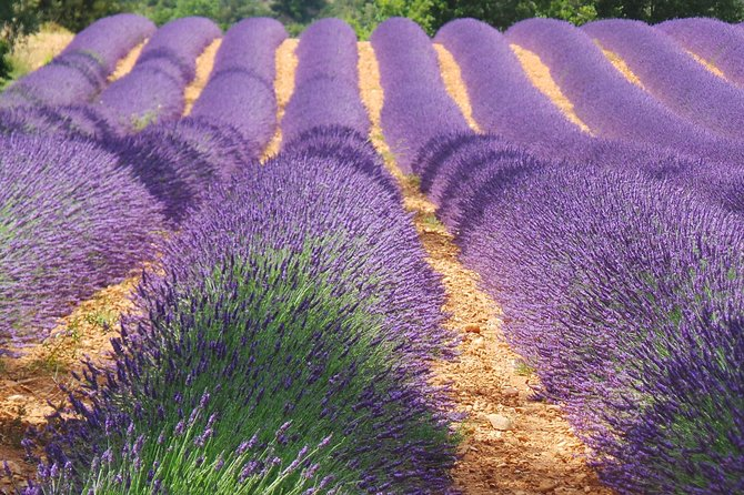 Small group Day tour to Aix-en-Provence, the lavender fields and wine tasting, Niza, FRANCIA