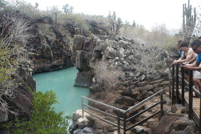 """This tour is responsible for taking tourists to four, different emblematic places of the Galapagos Islands. """"I would."""" It is a small island located two miles away where sea lions are. At the bottom of the sea, there are hundreds of fish and sea lions that can be seen along the way. """"Canal de Tiburones o Del Amor"""", which is a fissure, is formed by a magmatic chamber, where sonkeling is performed with shark sharks that are asleep that are completely harmless, we also have golden rays, eagle rays. Mangrove area where pelicans and herons nest depending on the season The cracks Here you will take a fifteen minute walk on lava rocks where you can see Darwin finches, shorebirds and lagoons, endemic or native vegetation.The cracks are brackish water canals, where you can snorkel and swim where we have Fish and Brunettes. Los Perros Beach """", where you will have the option of hiking. This beach was named for the large number of crabs found in the area."""