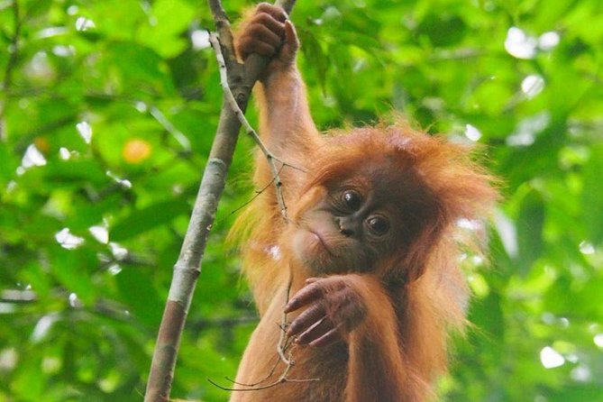 We are local people doing fantastic jungle trekking in bukit lawang national park, and we are born and growing up side of the jungle. So we know how about the jungle.<br>If you like to see the nature, jungle, and animals in wild life just coming here. Especially orang utan