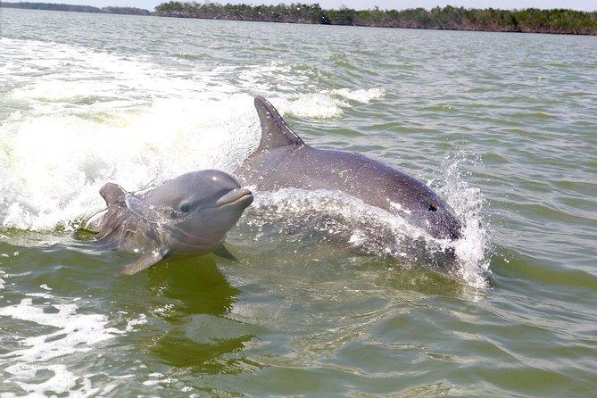 Small Group Motorboat Eco Tour of the Everglades, Naples, FL, ESTADOS UNIDOS