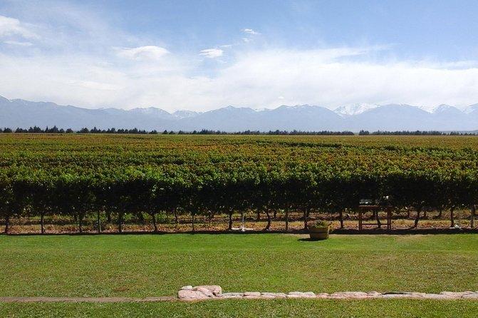 Por los caminos del vino