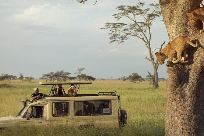 Safari Excelente y Safari lujos Tanzania, Arusha, TANZANIA