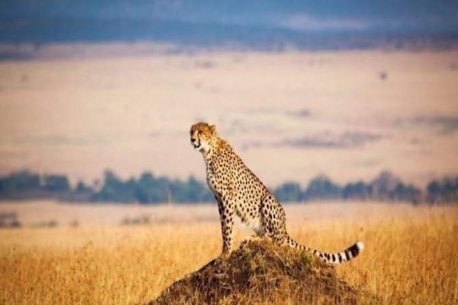 Tanzania offers the best safari national parks with stunning scenery, abundant wildlife and diverse cultures. This tour will take you to Serengeti National Park, in northern Tanzania, which is known for its massive annual migration of wildebeest and zebra and also Ngorongoro Crater where you can enjoy its blue-green vistas and unparalleled concentration of wildlife.