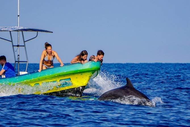 Experience the amazing sensation of swimming and dolphin watching in Puerto Escondido! We have five species of dolphins (spotted, spinners, bottle nose, pilot and river dolphins), that call Puerto Escondido home. We will encounter an extraordinary eco-system with abundant marine wildlife. Sea turtles, mobula rays, whales, flying fish, a variety of sea birds and many other magnificent marine animals abound. Don't forget your swimsuit, and cameras to enjoy these amazing creatures.