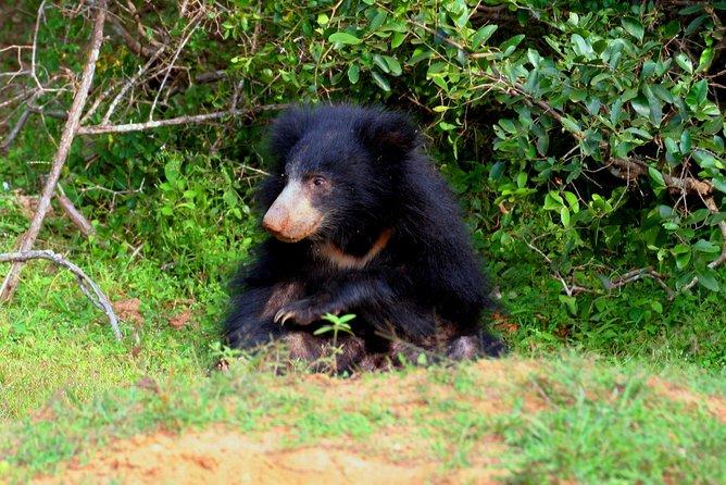 Yala Safari Half day jeep tour, Parque Nacional Yala, SRI LANKA