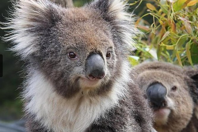 See the north's only nocturnal exhibit for night-loving marsupials. See Bilbies, visit our pioneering history exhibits. See Lizards and Crocodiles, Quokkas, and Wombats and most of all see Koalas. Join in the 2.30pm Marsupial presentation.