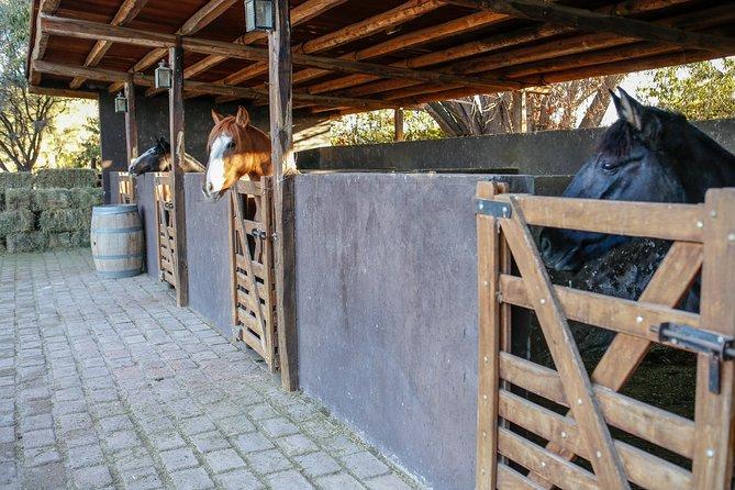 Paseo a caballo, degustación y almuerzo en bodega, Mendoza, ARGENTINA