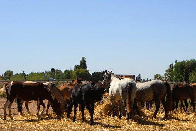 MAIS FOTOS, Paseo a caballo, degustación y almuerzo en bodega
