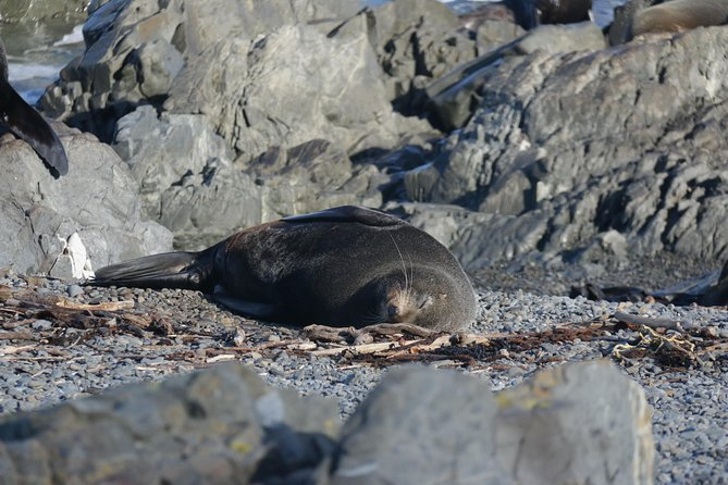 Small-Group Seal Colony and Wellington City Tour, Wellington, NUEVA ZELANDIA