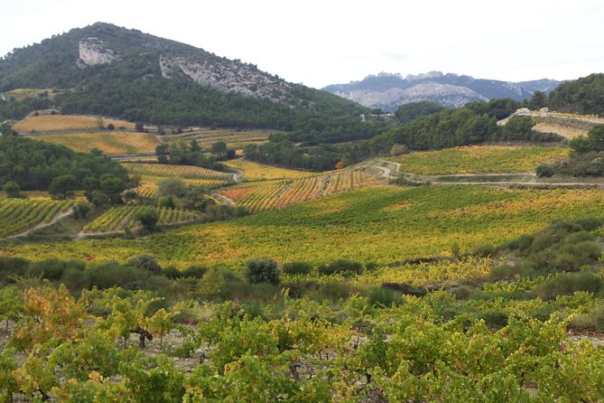 Provence Cru Wine Small-Group Half-Day Tour from Avignon, Avignon, França