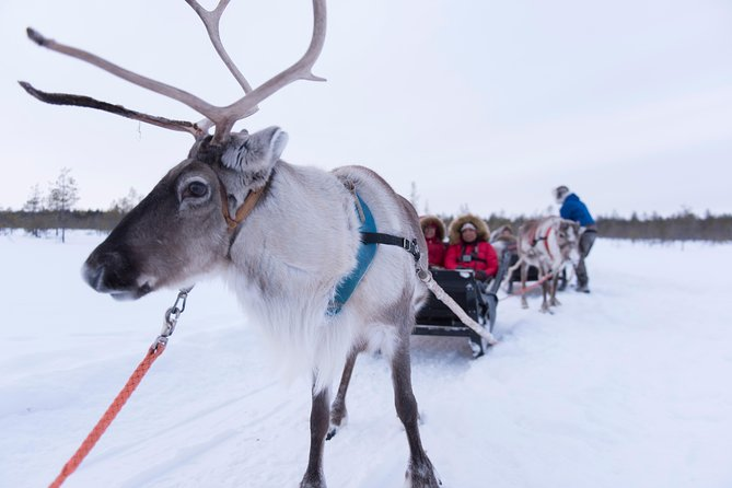 Visit one of the most traditional reindeer farms in Lapland, learn from the herders and explore the Arctic nature on a sleigh pulled by a reindeer.<br><br>Sticking to our philosophy, all our tours and activities are limited to small groups (8 guests/tour max) in order to get the best and most memorable experience of Lapland. We refuse mass tourism, and you will never end up in big groups -even in peak season!